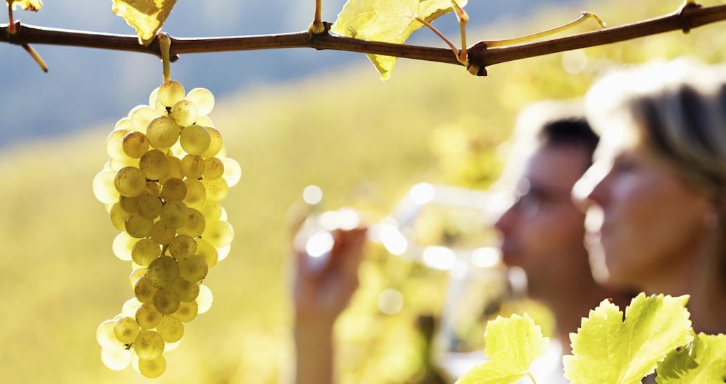 the_greek_wine_experience_robola_vineyatd_tasting