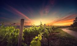 The-Greek-Wine-Experience-sunset_vineyard_picnic