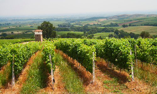 North_Greece_wine_tour